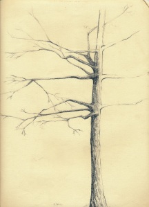 "Tree, pencil on paper.  9""x14"""