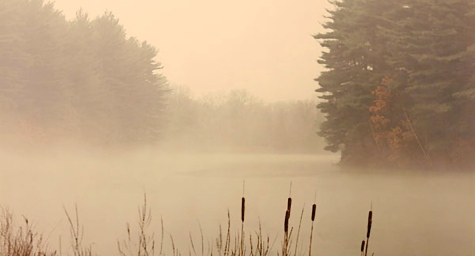 Foggy Marsh (Photograph)